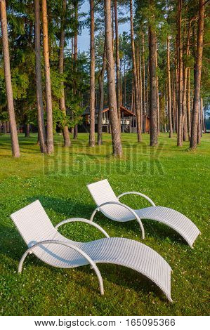 Two white deck chairs are in the pine forest