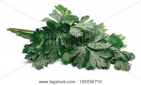 Bunch Of Flat-leaved Parsley, Paths