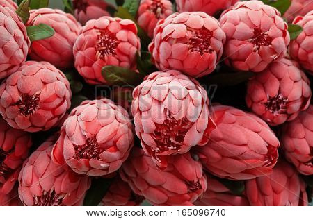 Bunch of Red Artificial Protea Aristata Flowers for Home and Building Decoration.