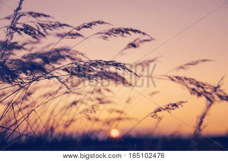 Reed against the backdrop of colorful evening sky