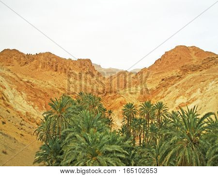 Oasis in Sahara desert, Tunisia, Northen Africa