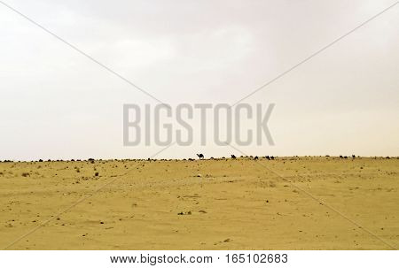 View of Sahara desert in Tunisia, Northen Africa