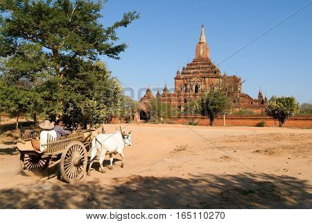 Bagan Myanmar 23 January 2010: Farmer on a cow-drawn carriage in front of Sulamani temple at the archaeological site of Bagan on Myanmar
