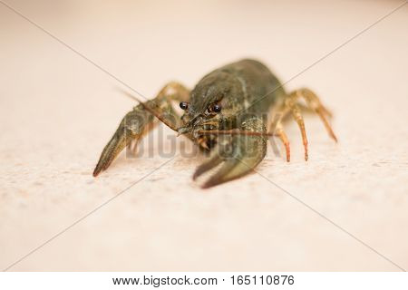 nutrition Live Crayfish on a marble table