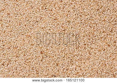 Background texture of Ethiopian, ivory, Teff grains.