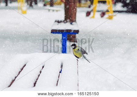 Great tit sits on bench covered snow in winter park snowstorm