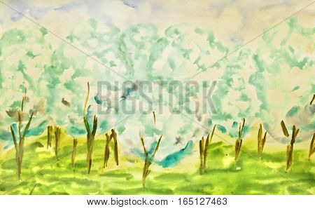 Hand painted picture, watercolor, white apple garden in spring in blossom.