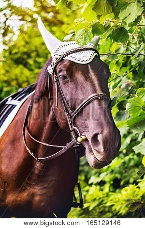 Horse with a nice bridle portrait in summer
