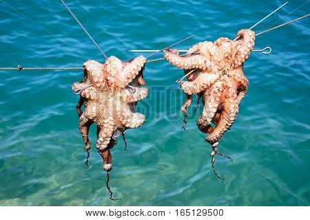 Two squid skewered and on display outside a restaurant in the harbour with the sea to the rear Elounda Crete Greece Europe.