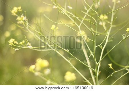 Peaceful green background with light yellow flowers