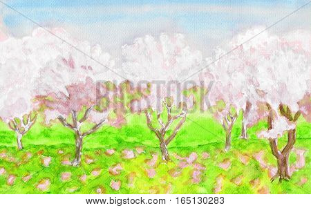 Spring landscape, garden with trees in blossom of pink color, hand painted picture, watercolors.