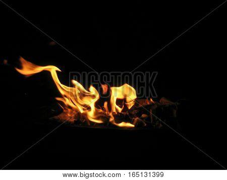 Flame looking like horse. Flame horse. Fire on coal