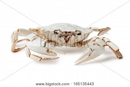 Small skeleton of crab on white background