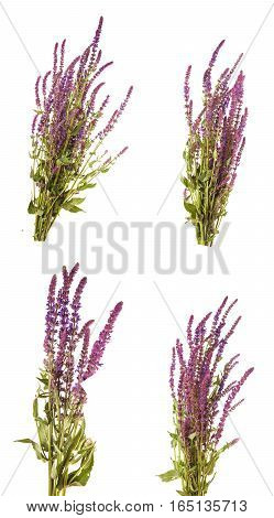 Bouquet Of Blooming Purple Sage. Isolated On White Background