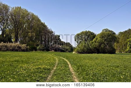 fresh spring meadow with trees, pathway and clear sky near Studenka in CHKO Poodri in Czech republic poster