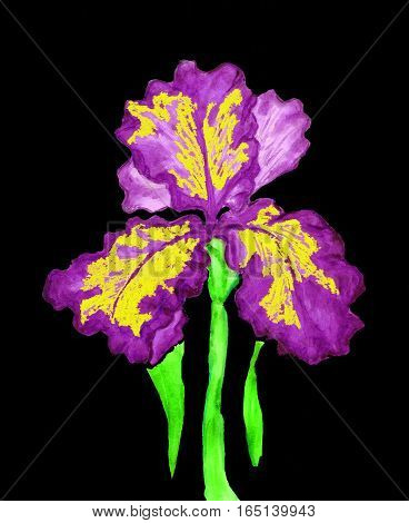 Hand painted picture, watercolor, iris of violet and yellow colour.