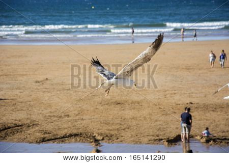 Photo of a bird with beach, sea and sunlight