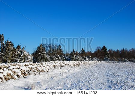 Wintry field with old snow covered stone walls in a sunny landscape