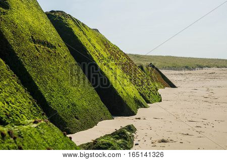 breakwaters turned green by moss on a beach
