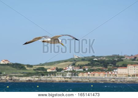 Photo of a bird with landscape, blue sky and sunlight
