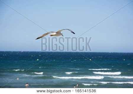 Photo of a bird with sea, blue sky and sunlight