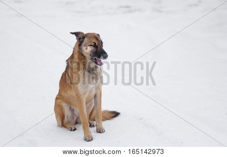 Outdoor portrait of cute mixed-breed stray dog sitting on a fresh snow at winter season