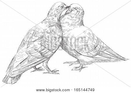 Two lovers Pigeons , who kissing vector Illustration