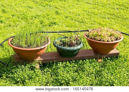 Three Pots With Salad On A Wooden Stand