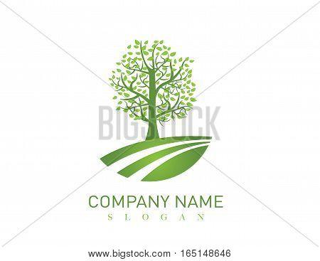 Big oak tree design on white background