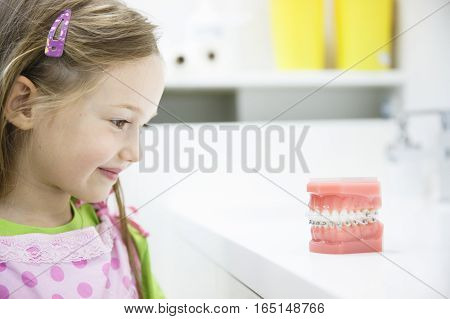 Little girl observing artificial model of human jaw with dental braces in dentists office smiling. Pediatric dentistry aesthetic dentistry early education and prevention concept.