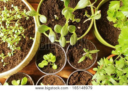 Young fresh seedlings on wooden background .