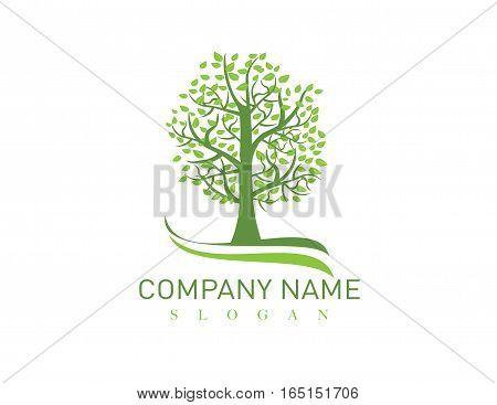 Big oak tree logo on white background