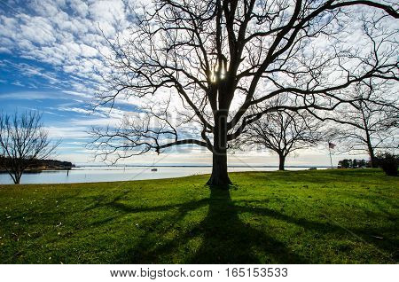 BARE TREE AND SHADOW WITH SKY, BRIDGE, WATER AND FLAG IN THE BACKGROUND
