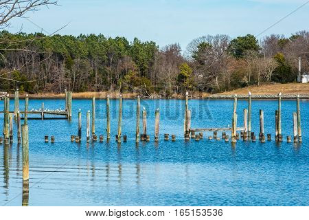 GULLS IN A ROW ON PILINGS AND GROUPED ON DOCK