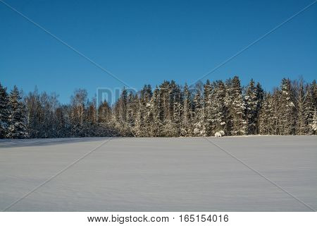 winter landscape. Sunny day. Winter decline. The bright colors. Simple landscape. Winter forest. forest road. winter fild.