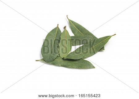 Bay Leaves. Laurus Nobilis isolated on white background