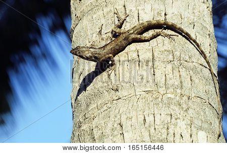 medium lizard in wild nature on palm tree close up