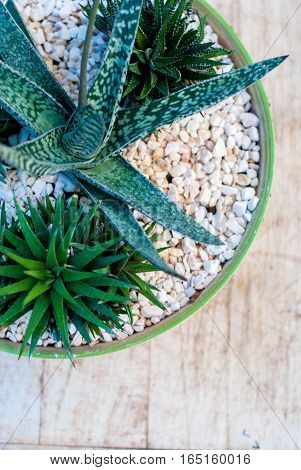 Several succulents in pots. Potted plants on a wooden table.