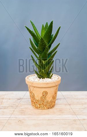 Houseplant aloe in the soil on the rough wooden table with a stone ground.