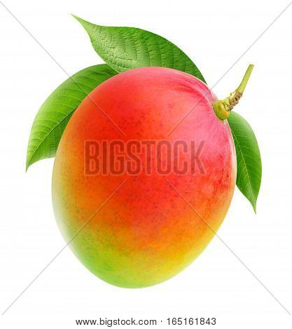 Isolated Mango On A Branch