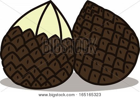 Snake Fruit Vector Illustration Isolated on White
