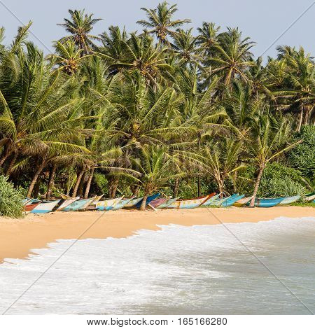 Tropical beach with exotic coconut palm trees and wooden boats on the sand near sea water wave. Sri Lanka