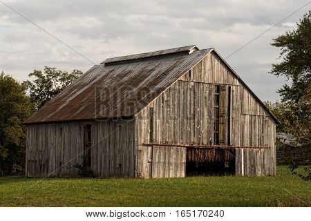 Late afternoon sun illuminates the front of a tobacco barn in western Kentucky. Notice that the leaves have cured to a golden tan color. Under the watchful eye of the grower the doors are opened and closed to control the humidity of the leaf.