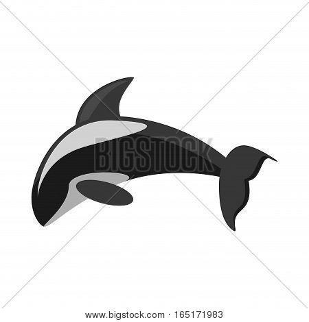 killer whale marine wildlife species vector illustration eps 10
