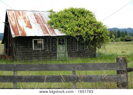 Abandoned House With Ivy
