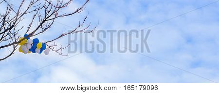 Colorful helium balloons hanging branches of tree under blue sky with clouds
