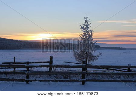 Lonely fir-tree in the snow-covered field at sunset