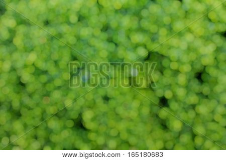 Bokeh Pattern Green Leaves Background, Blur Abstract Green Leaf