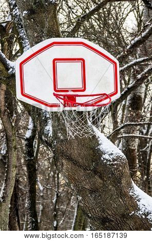 close-up of the basketball basket in snow