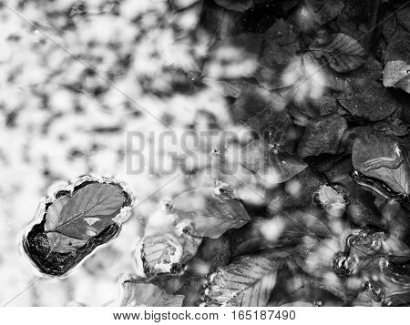Orange Leaves Frame In River. Fallen Beech Leaves In  Mountain River,